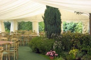 Marquee Built over Conifer Tree